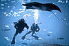 Divers at the Georgia Aquarium (mjkjr) Tags: blue atlanta summer water canon ga aquarium divers underwater availablelight atl scuba georgiaaquarium diver dslr 70200 f4 saltwater telephotolens 2010 selectivefocus potn f4l 550d ef70200mmf4lusm t2i clubsi httpwwwflickrcomphotosmjkjr