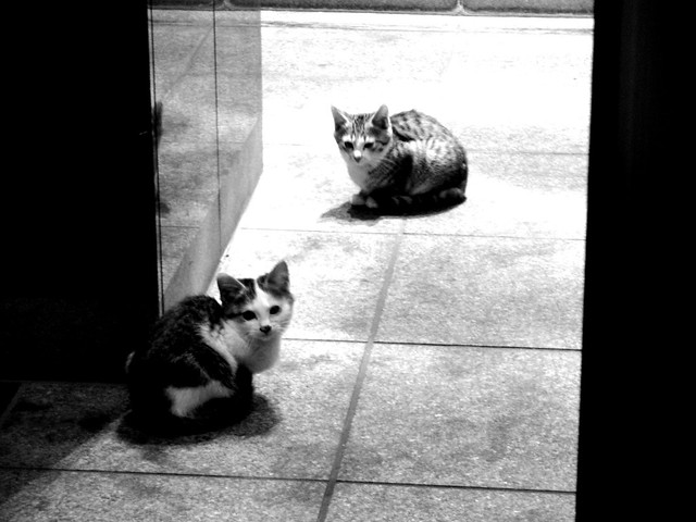 Today's Cat@2010-12-31