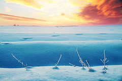 crossing the wave (Youronas) Tags: pink blue schnee light red sky orange plants sun sunlight snow cold tree ice nature clouds sunrise canon germany landscape bayern deutschland bavaria licht sticks frost december dusk teal natur pflanzen meadow spuren traces himmel wolken franconia 7d fields dmmerung franken kalt landschaft sonne sonnenaufgang daybreak flur farmlands morgendmmerung wildwechsel sonnenlicht stngel 1585 fusspuren