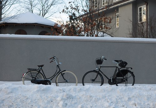 Winter Pashley and Gazelle
