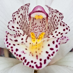 Orchid close-up (Domdomfrommionnay) Tags: orchid macro orchide macrophotography kenkoextension canoneos50d canonef75300mmf456usm mothernaturesgreenearth