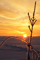 kissed by eos (Youronas) Tags: pink schnee light red sky orange sun sunlight snow plant cold ice nature clouds sunrise canon germany landscape bayern deutschland bavaria licht sticks frost december crystal dusk natur pflanze spuren traces himmel wolken frosty franconia 7d dmmerung franken kalt eis twigs landschaft sonne sonnenaufgang daybreak flur frostig morgendmmerung sonnenlicht eiskristall stngel 1585 fusspuren