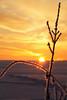 kissed by eos (Youronas) Tags: pink schnee light red sky orange sun sunlight snow plant cold ice nature clouds sunrise canon germany landscape bayern deutschland bavaria licht sticks frost december crystal dusk natur pflanze spuren traces himmel wolken frosty franconia 7d dämmerung franken kalt eis twigs landschaft sonne sonnenaufgang daybreak flur frostig morgendämmerung sonnenlicht eiskristall stängel 1585 fusspuren