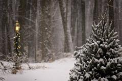 IMGP0096_2 (irishwhite) Tags: snow home woods bokeh pentaxkx pentaxfa100mmf28macro