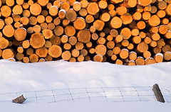 Winter's Harvest (Canadapt) Tags: winter snow abstract fence logs logging canadapt