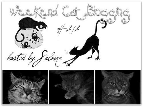 Weekend Cat Blogging #292