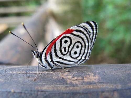 Butterfly at Iguazu Falls - Iguazu, Argentina
