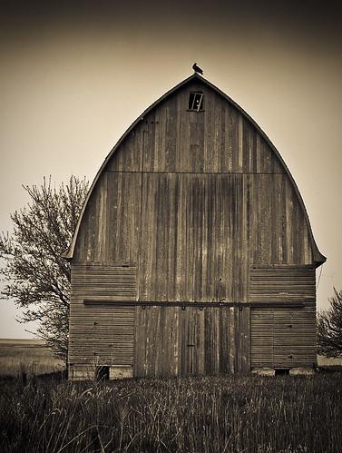 Roost by Fotoroadtripr