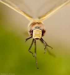 Dragonfly.. (ZiZLoSs) Tags: macro canon eos dragonfly 7d usm f28 aziz ef100mmf28macrousm abdulaziz  ef100mm zizloss  3aziz canoneos7d almanie abdulazizalmanie httpzizlosscom