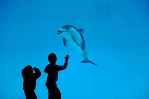 [フリー画像] 動物, 哺乳類, クジラ目, イルカ, 子供, シルエット, ブルー, 201101221100