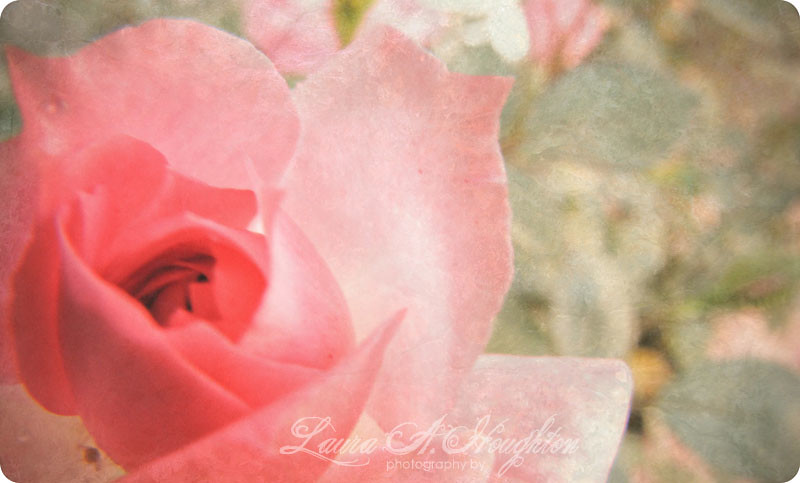 macro friday flower