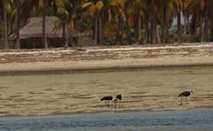 Mozambique-4571