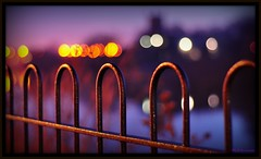 ~Let There be Fences~(Front page/Explore) (Eddie The Bugman) Tags: nottingham morning light interesting focus purple bokeh fences explore lilac nikkor50mmf18 frontpage hff bugman explored nikond90 wildlifeonthego