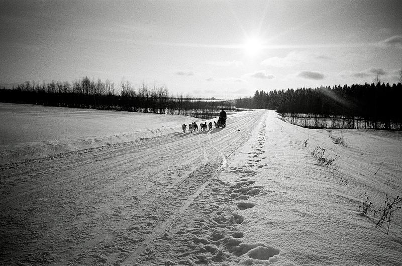 Mosko husky