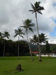 Waioli Mission Hall (jimmywayne) Tags: hawaii kauai kauaicounty hanalei historic coconut palm tree nrhp nationalregister