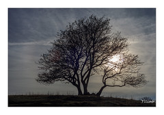 Derniers Rayons - Plateau du Retord (Ylliab Photo) Tags: ylliabphoto ylliab lepaysagesimplement landscape lumire art canon eos5d french france flickr tree arbre sun soleil plateauduretord ain