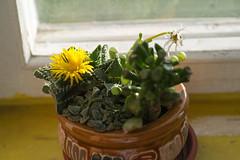 . (akk_rus) Tags: tamronspaf90mmf28dimacro tamron 90mm f28 nikon d80 nikond80 nature  flower flowers