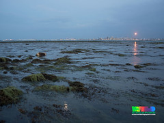 Flaring at Jurong Island from Cyrene Reef (wildsingapore) Tags: cyrene reefs threats industries pollution jurong island sland singapore marine intertidal shore seashore marinelife nature wildlife underwater wildsingapore