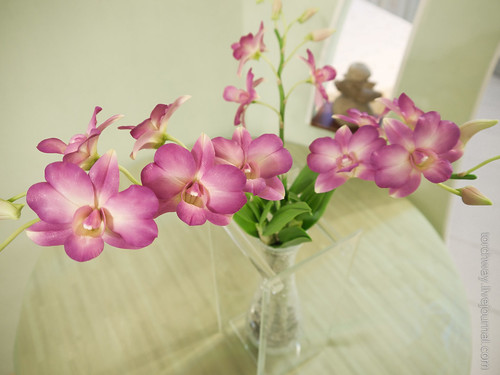 OrchidDendrobium-9.jpg