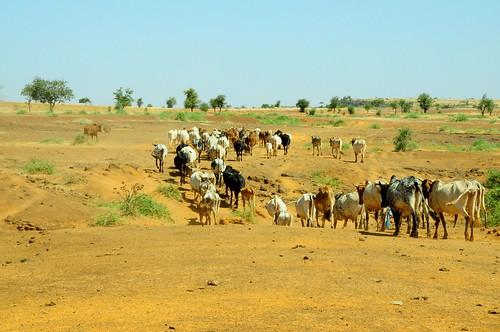 Ninigui Village - Yatenga (Burkina Faso)