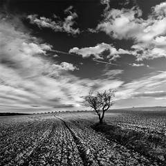 One Tree Speaking With the Clouds (DavidFrutos) Tags: bw tree monochrome field clouds square landscape interestingness dramatic paisaje bn explore murcia filter nubes rbol alfa campo alpha filters drama cpl circularpolarizer filtro sigma1020mm filtros polarizador neutraldensity sonydslr flickraward densidadneutra polarizadorcircular interesantsimo davidfrutos 700 niksilverefexpro platinumpeaceaward flickraward5 mygearandmepremium mygearandmebronze mygearandmesilver mygearandmegold mygearandmeplatinum flickrawardgallery ciezaycalasparra