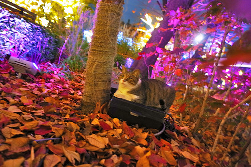 cat & colored leaves & illumination