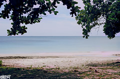 flat. (ekaintc) Tags: sea plant tree beach indonesia mar sand nikon singapore asia flat playa arena 1855mm southeast indo ola bintan hondartza harea olatu d40x