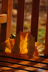 pca132 - About You (Joyce-445) Tags: bench golden leaf simplicity slats contemplative 100words pca132aboutyou twowordsthatbelongtome