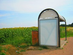 Italia (CiaoChowChow) Tags: road italy flower field rural vanishingpoint highway path busstop dirt trail sunflower unexpected