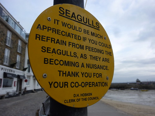 Seagulls of St Ives: Warning 2