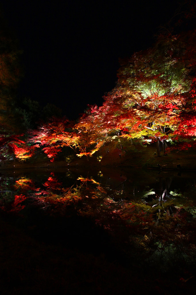 Kodaiji Red Leaf Lightup 2010 (2)