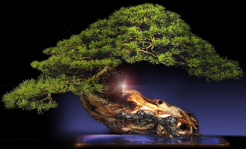 """Bonsai 061 • <a style=""""font-size:0.8em;"""" href=""""http://www.flickr.com/photos/30735181@N00/5261333191/"""" target=""""_blank"""">View on Flickr</a>"""