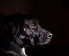 Sadie (Judy Rushing) Tags: pets black dogs sadie gamewinner favescontestwinner herowinner ultraherowinner thepinnaclehof pregamewinner pregamesweepwinner enterpinnacle11311pets favescontesttopseed favescontestfavored tphofweek122