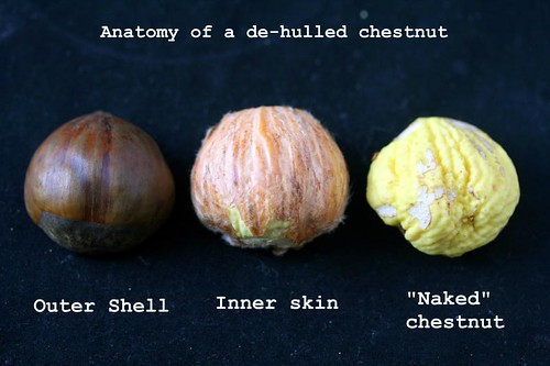 chestnut anatomy