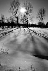 black threes (blickfang-sue) Tags: schnee shadow bw snow nature schatten schwarzweis