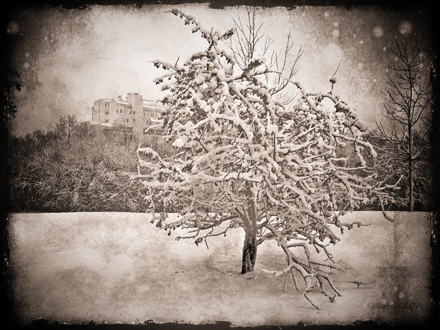 Evry Daily Photo - Parc Henri Fabre Version Sepia