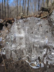 IMG_6004 (Ellen Bulger) Tags: winter ice nature woods connecticut woodbridge wepawaugriver