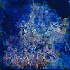 blue - by adina