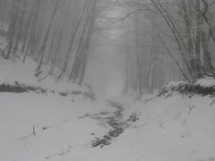 Into the White (Tauromardo) Tags: wood winter italy white mist snow nature fog forest italia natura basilicata nebbia inverno bianco beech lucania appennini apennines faggi valdagri volturino calvello
