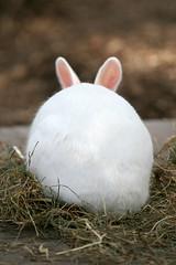 Rabbit - 08