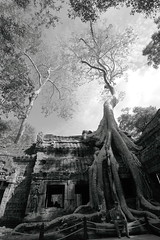 Silk-cotton trees entwined among ruins (ChR!s H@rR!0t) Tags: cambodia siem reap thom angkor ta blackdiamond phrom mygearandme
