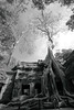 Silk-cotton trees entwined among ruins (ChR!s H@rR!0t) Tags: cambodia siem reap thom angkor ta blackdiamond phrom mygearandme