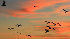(Shelby_2001) Tags: blue sunset sea vacation sky orange seagulls beach birds silhouette clouds evening flying seaside sundown flight seashore