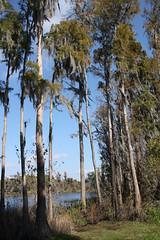 Lake Park, Lutz Florida (In a Juice Box (Lori Shaffer)) Tags: lake dock lakepark cypresstrees lutzflorida