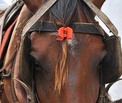 (Lulu@) Tags: horse cavalo