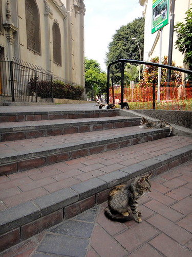 Cats Relaxing in Parque Kennedy de Miraflores