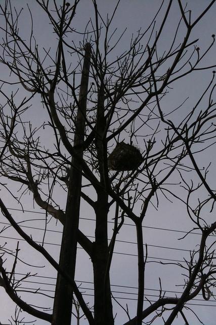 TreeAspect