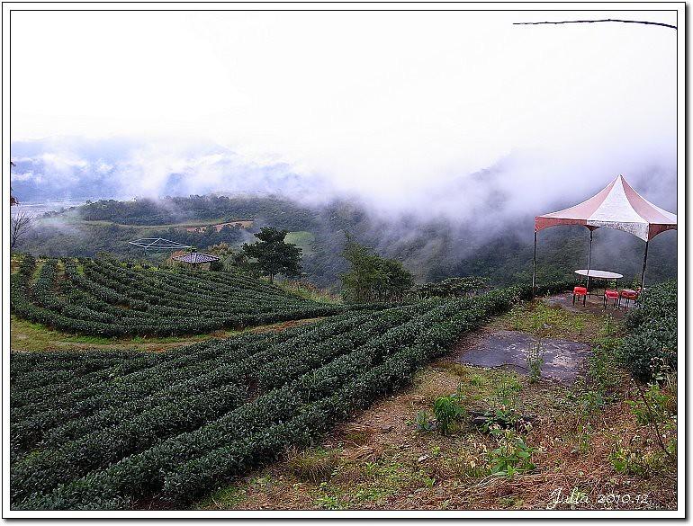 玉蘭茶園 (3)