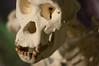 El esqueleto (II): Funciones del sistema esquelético