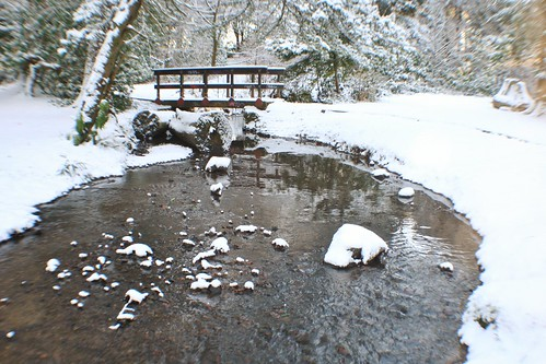 Parkland stream in Winter